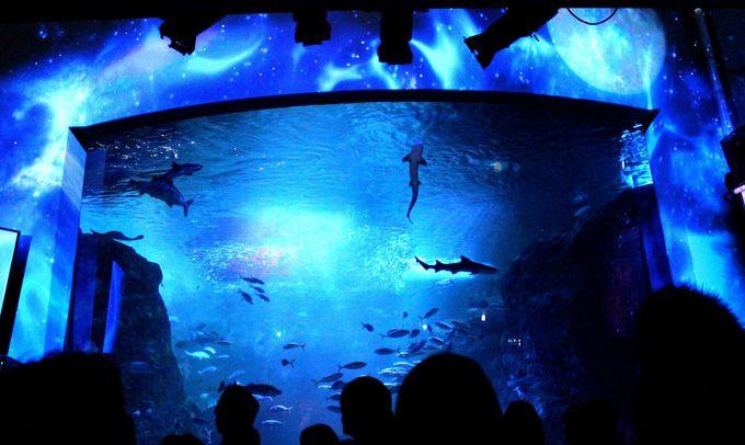 魚になって夜の海を体感しよう