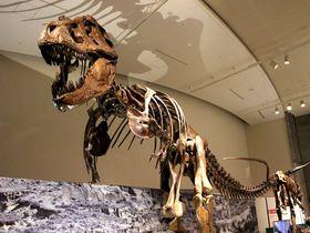 ココがスゴイ!群馬県立自然史博物館へ行くべき6つの理由|群馬県|トラベルjp<たびねす>