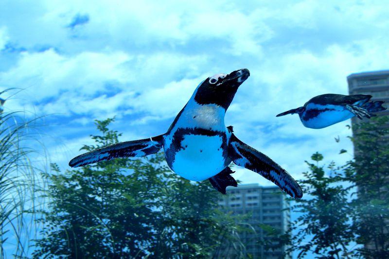 キミも空飛ぶペンギンの目撃者に!池袋「サンシャイン水族館」