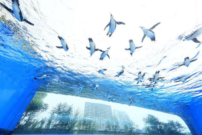 「天空のペンギン」で空飛ぶペンギン発見!