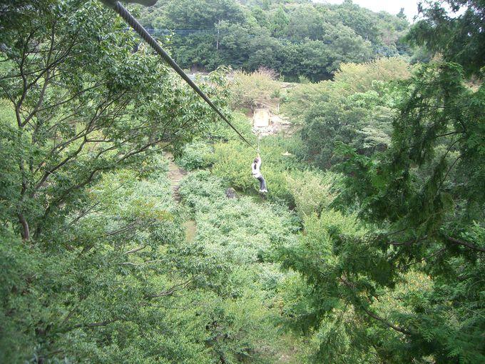 筑波山梅林の上を滑空する100mのジップスライド!