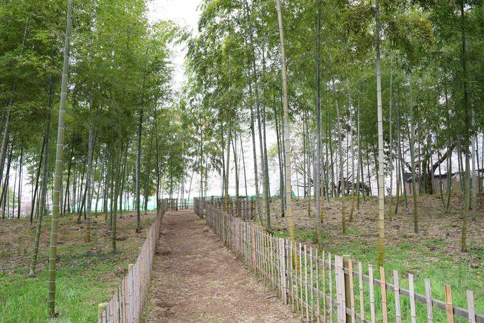 広大な園内には、バーベキューガーデンや竹林、葡萄畑も