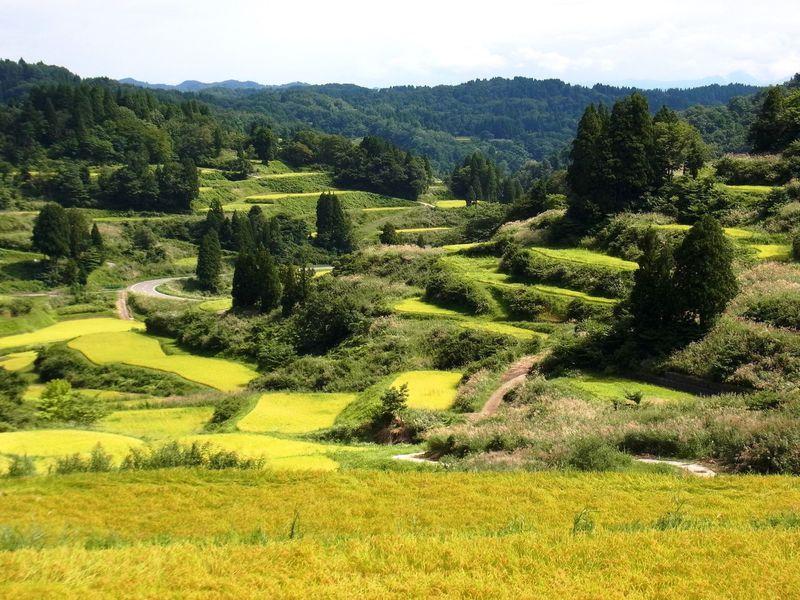 美と癒しの秘密に迫る!新潟県十日町市の原風景と松之山温泉