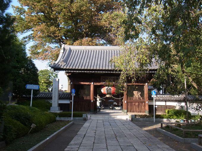 お寺を見守り続ける、総持寺のケヤキに癒される