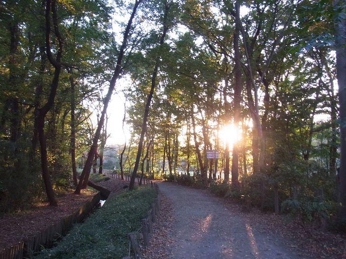 木漏れ日が美しい野火止用水路を帰り道に