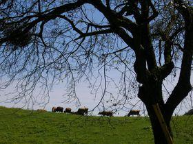 日本最古の牧場!群馬「神津牧場」で大自然を満喫する|群馬県|トラベルjp<たびねす>
