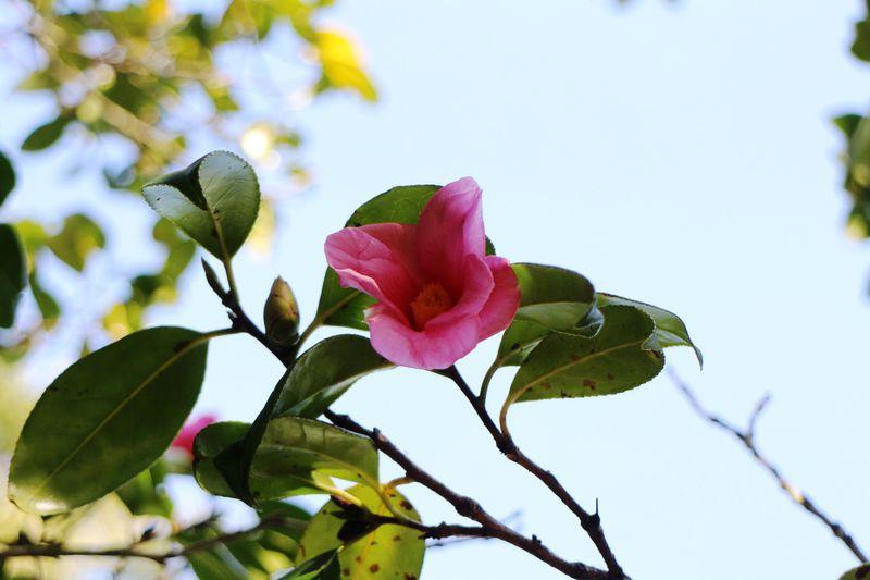 小さな幸せに気づける!草花と古木があふれる鎌倉・英勝寺