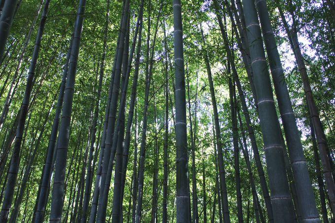 山の中で竹林を楽しむ!