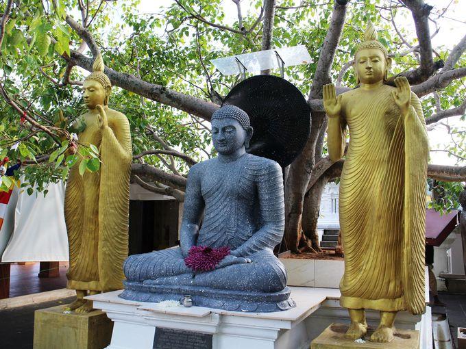 スリランカの「ご神木」菩提樹が植えられた菩提樹堂