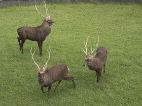 人と鹿とのガチ勝負!300年以上続く奈良の伝統神事「鹿の角きり」