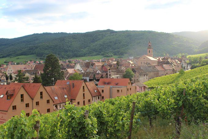 葡萄畑の真ん中で、中世にタイムスリップ!