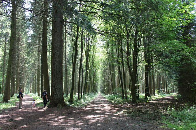 森の小道で出会う、人生のターニングポイント!?