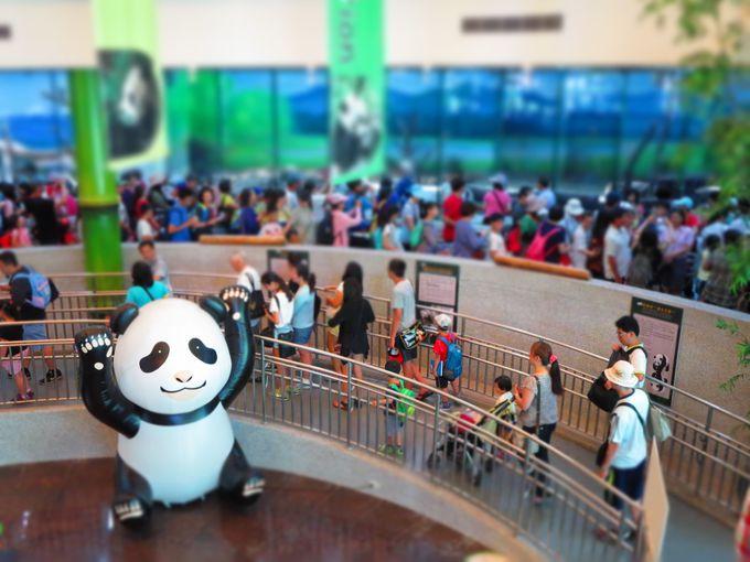 台湾屈指の動物園、台北市立動物園でパンダに会おう!