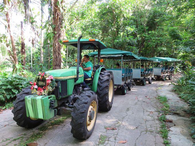 トラクターツアーで園内の散策へ!