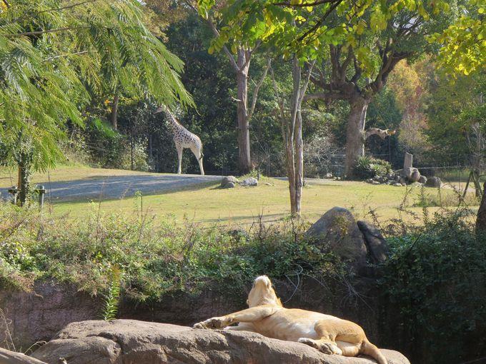 アフリカ・サバンナを見事に再現