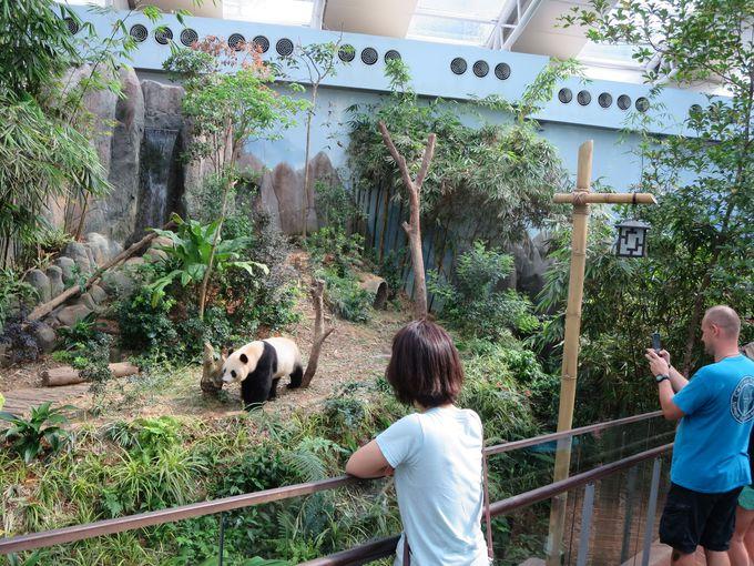なぜかパンダ!「客寄せパンダ」に最接近?