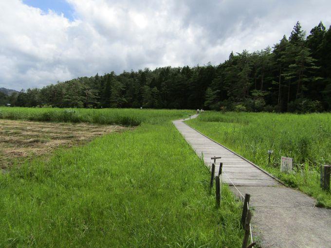 湿原の奥深くまで続く遊歩道は1周できる!