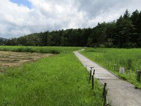 徳島・黒沢湿原は野花の宝庫!時間をかけてゆっくり散策が◎