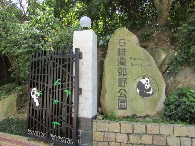 マカオのパンダは自然公園の中にいる!?
