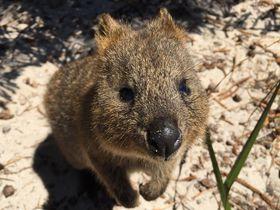 パース&西オーストラリア州のおすすめ観光スポット10選|北陸地方|トラベルjp<たびねす>