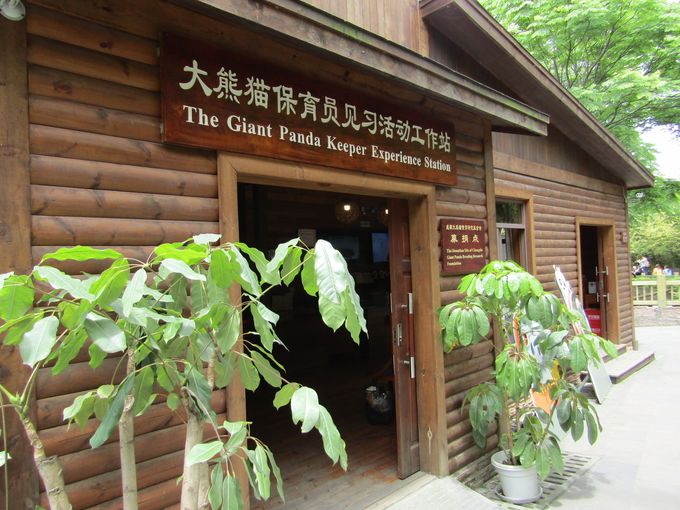 パンダの保護に直接参加したい!「パンダ繁殖研究基金会」