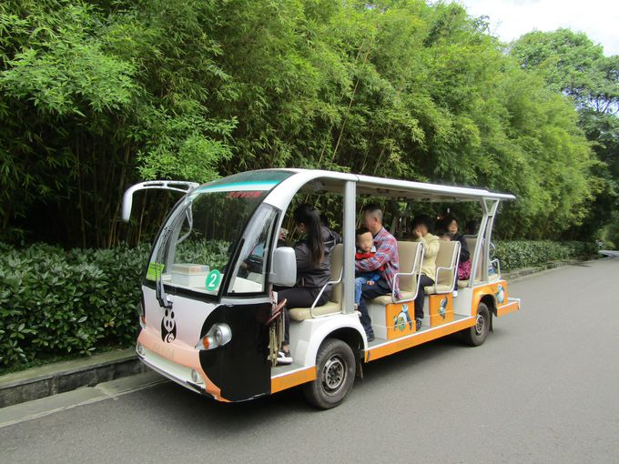 成都市内でたくさんのパンダに会える「成都パンダ繁育研究基地」