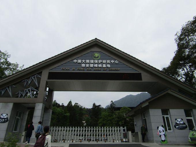 四川省山奥のパンダの生息環境を再現「雅安パンダ保護研究センター」