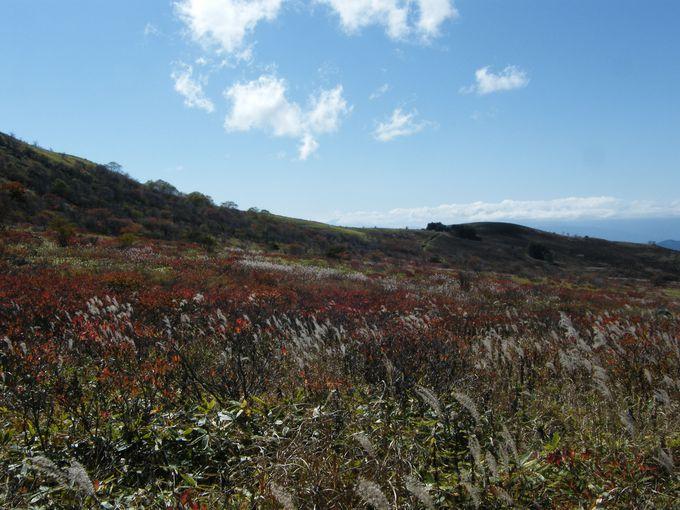 霧ケ峰の魅力は草原にあり