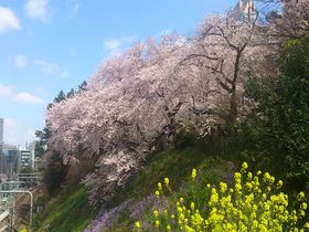 プライベートな花見スポットなら東京「外濠公園」がオススメ!