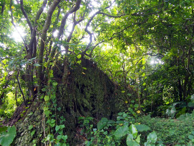 木々のトンネルを通り、自然からパワーをもらいながら…