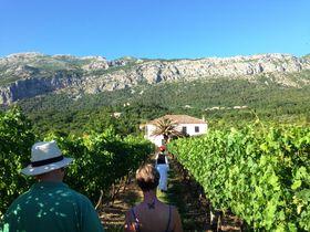 ワイン好き必訪!クロアチア・コナヴレ地方でワイナリー巡り