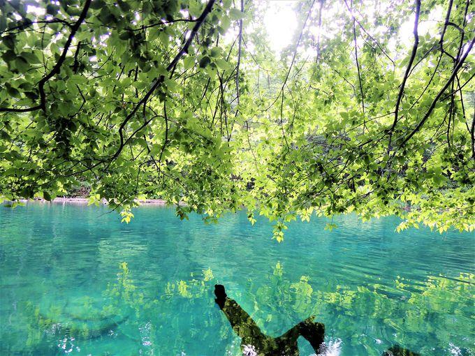 水質日本一!「支笏湖」の美しさは国のお墨付き