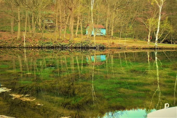 緑の絶景は5月下旬頃から