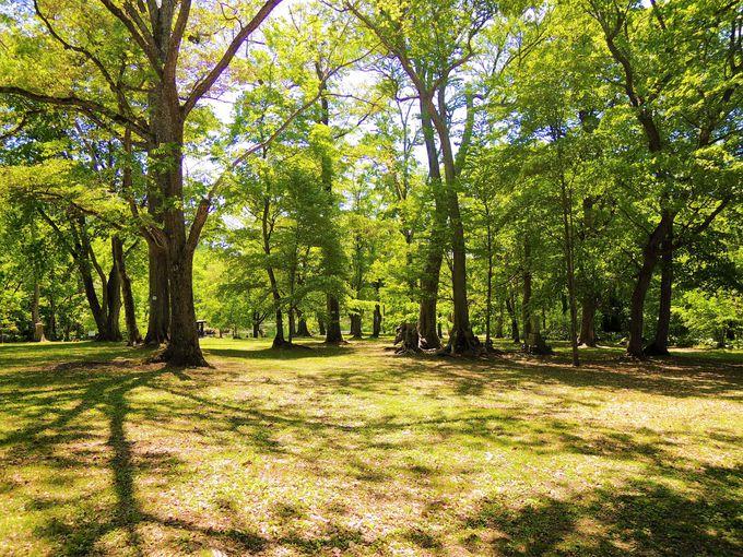 自然豊かなフォレストグリーンの「鳥沼公園」