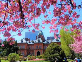 札幌駅から徒歩10分。赤れんが庁舎で楽しめるお花見とライトアップ|北海道|トラベルjp<たびねす>