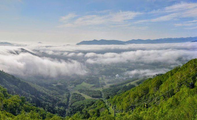 刻々と変化する雲海!トマムで見られる雲海の数々