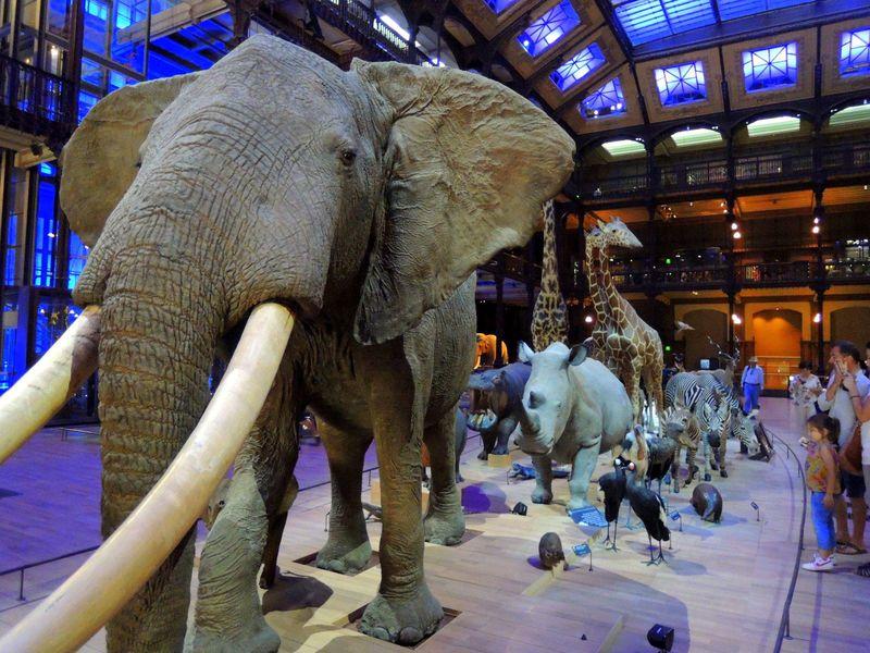 なんてオシャレな大行進!パリの個性派「進化大陳列館」の動物展示がスゴイ!