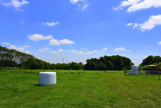 セグウェイのコースは牧草地!緑の牧場を青空の下、駆け抜けよう!