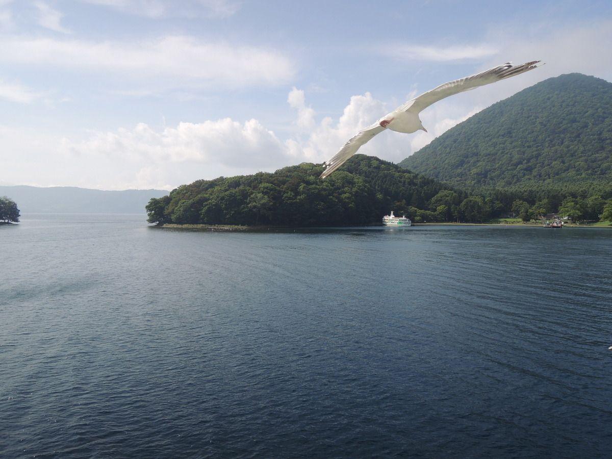 かもめも湖の景色も抑えたい!遊覧船のシャッターチャンス