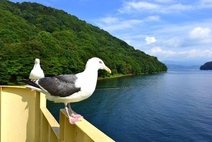 かもめだけじゃない!中島は雄大な自然とエゾ鹿の島