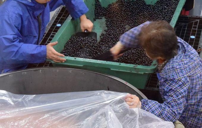 ワイン造りへの情熱がスゴイ!