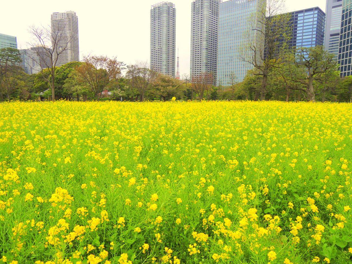 四季折々の花々が美しい東京都内の「庭園」を観光