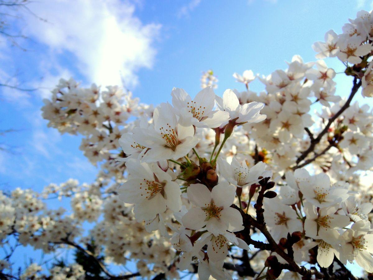 まるでフィンランド!札幌中心部のオアシス「中島公園」四季のパレット