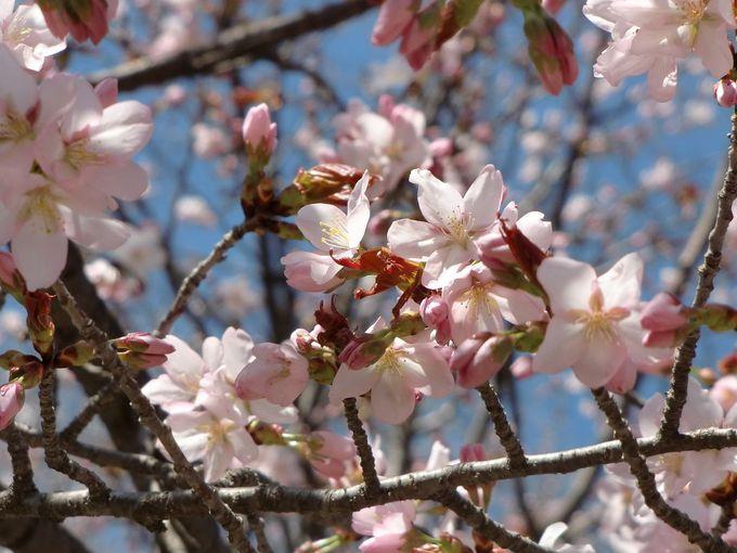 「団子より花」の風流なアナタへ
