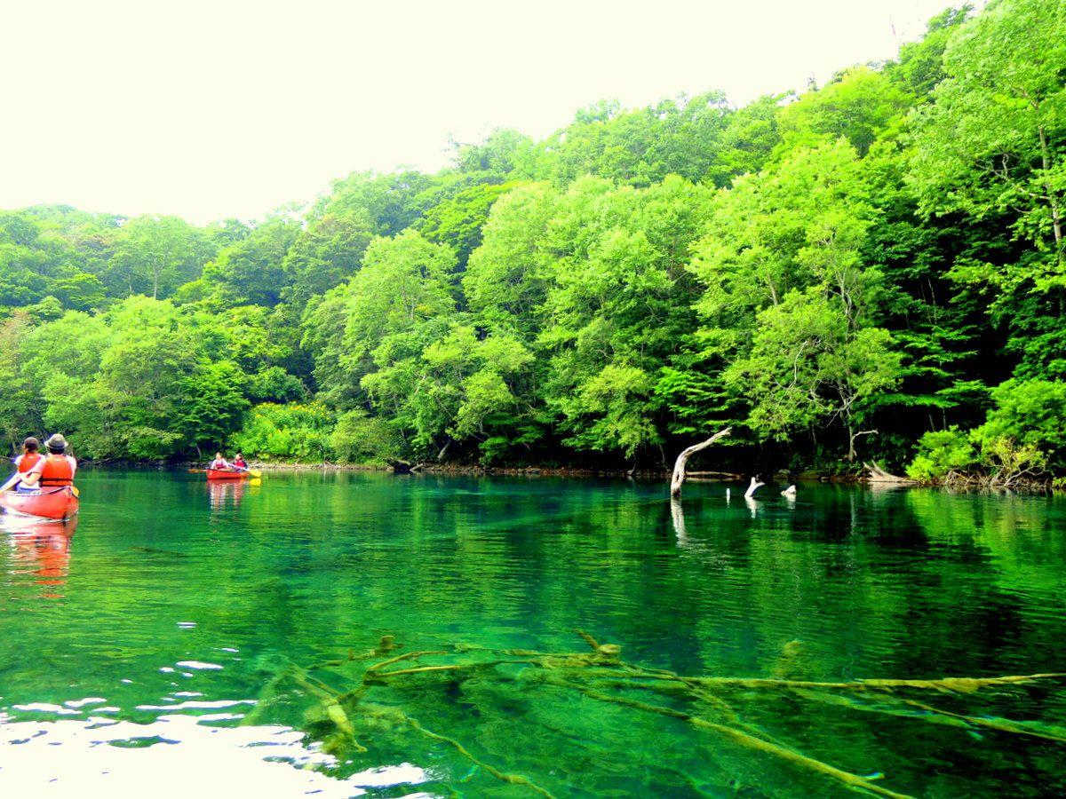 水の中に森がある!エメラルドグリーンに輝く湖面
