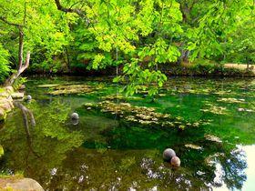 ラベンダーが終わる8月以降も美しい富良野絶景スポットまとめ|北海道|トラベルjp<たびねす>
