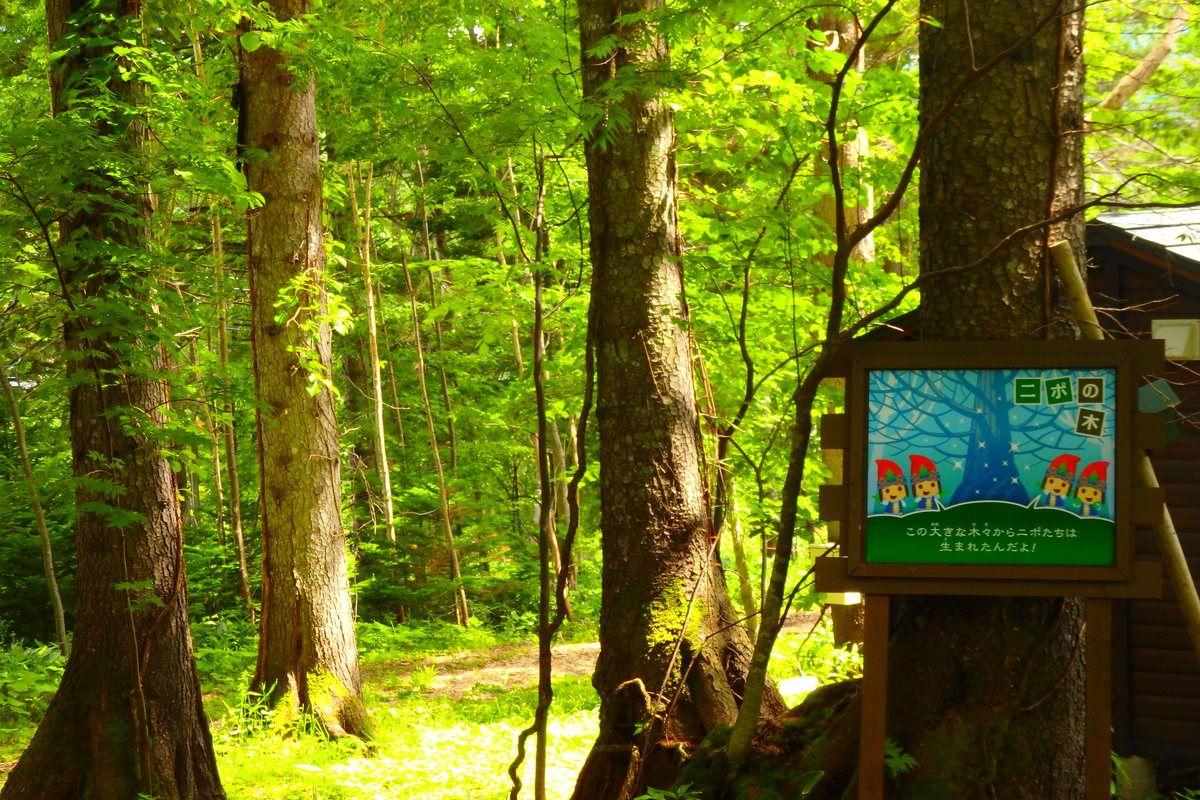 森林浴をしながらアスレチックを楽しもう!