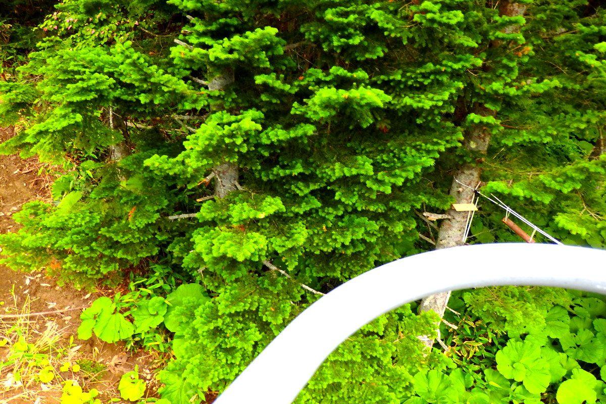 目線は鳥!雪山とは違う緑の森が足元に広がるリフトからの風景