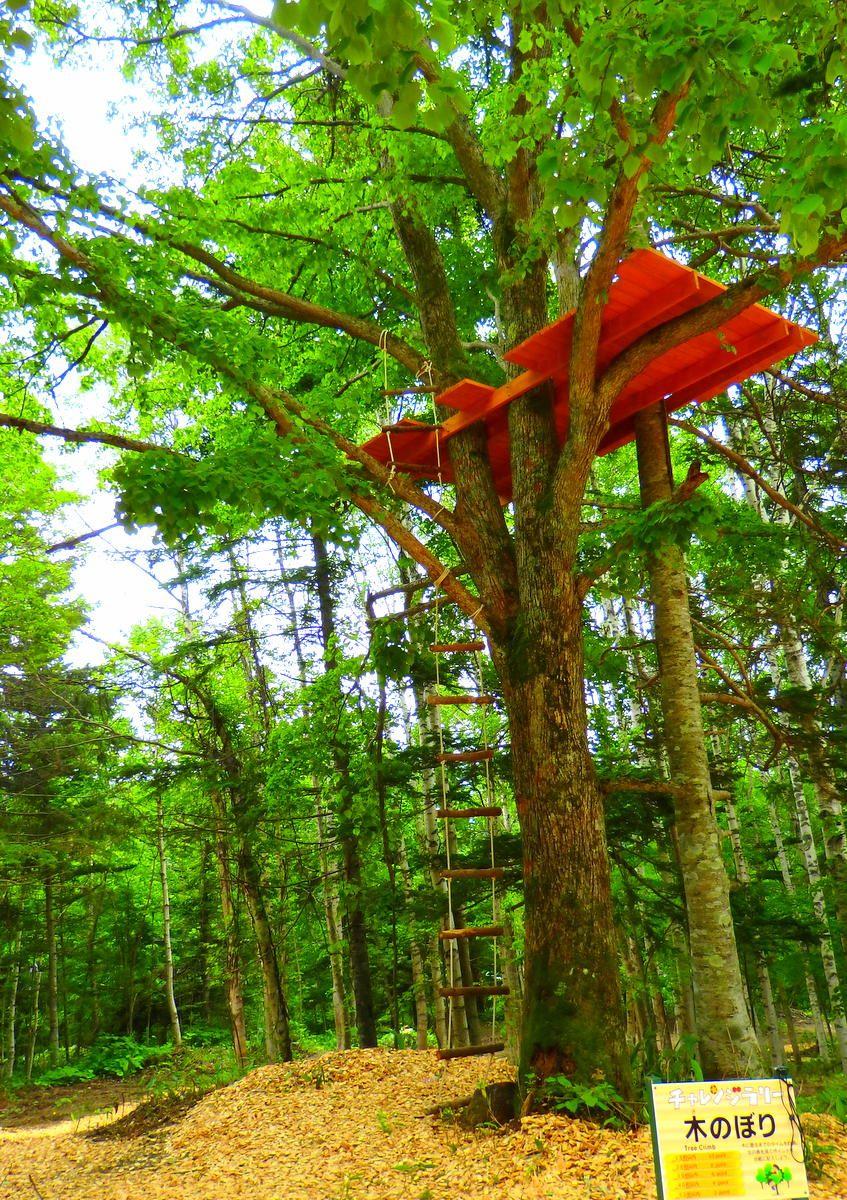 星野リゾート トマム「アドベンチャーマウンテン」で子供と一緒に自然を駆け巡ろう!