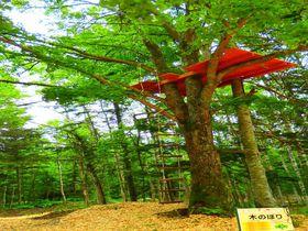 星野リゾート トマム「アドベンチャーマウンテン」で子供と一緒に自然を駆け巡ろう!|北海道|トラベルjp<たびねす>